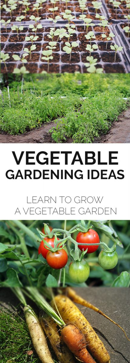 How to grow a vegetable garden