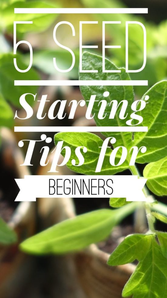 5 seed starting tips for beginners