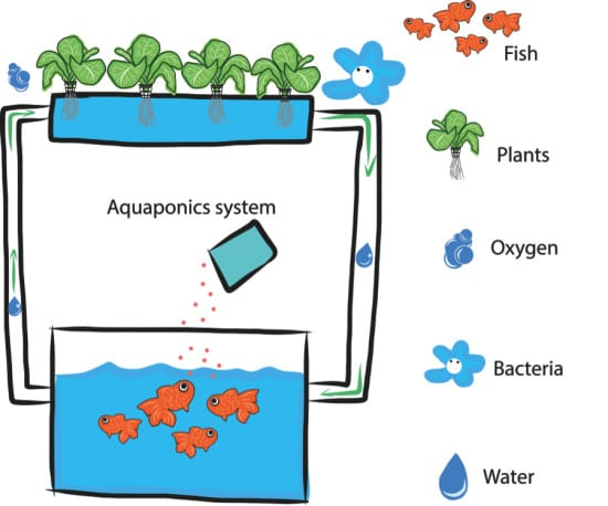 Aquaponics Design Infographic