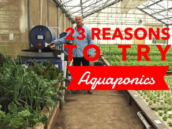 how to use aquaponics